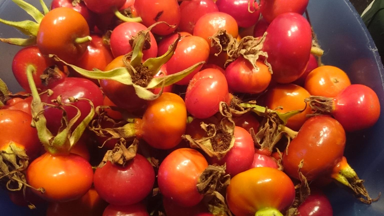 Die Früchte