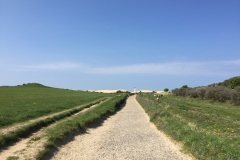 Rubjerg Knude Fyr - Weg durch die Klitplantage